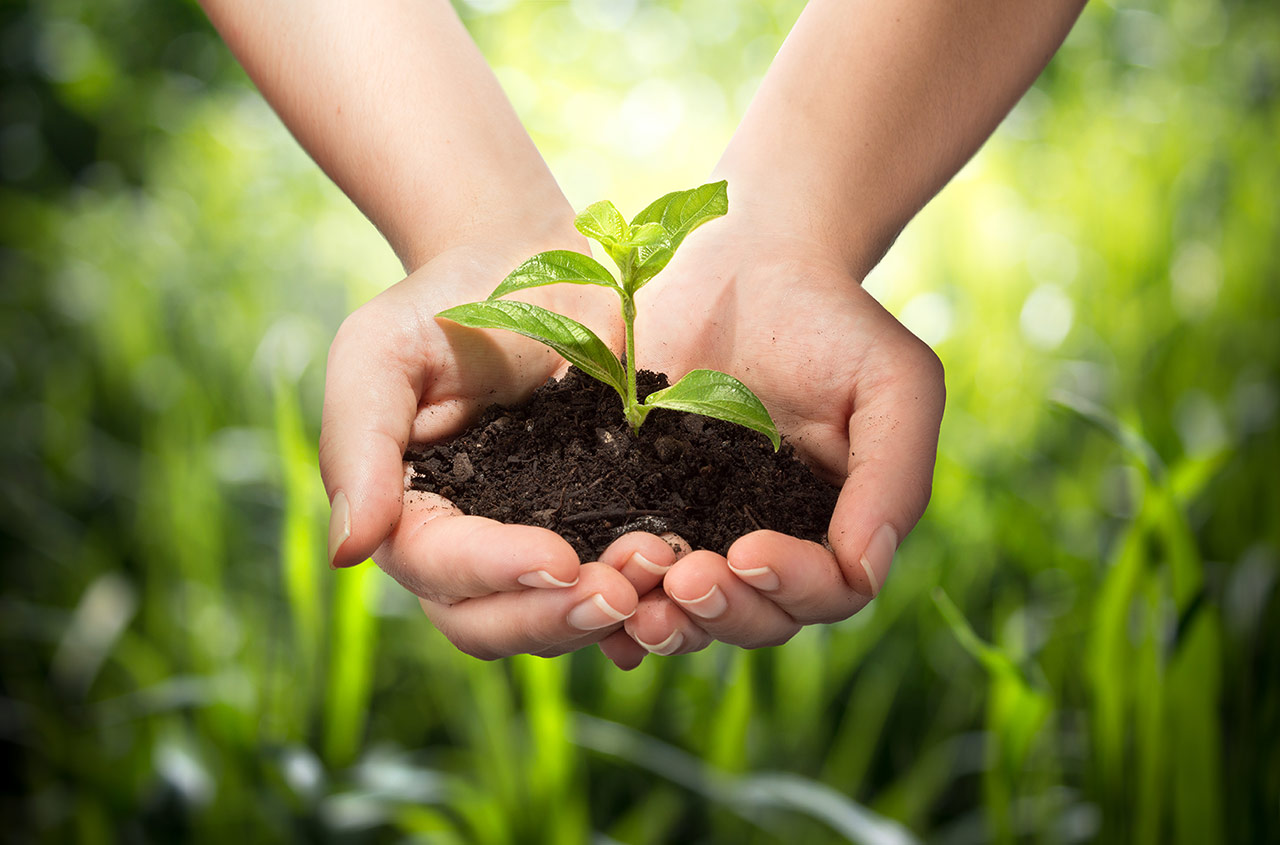 Hands holding a young plant and soil.